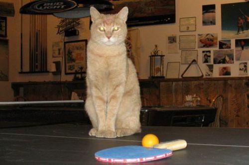 猫市長10