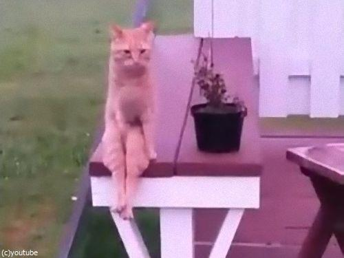 人間のように座る猫06
