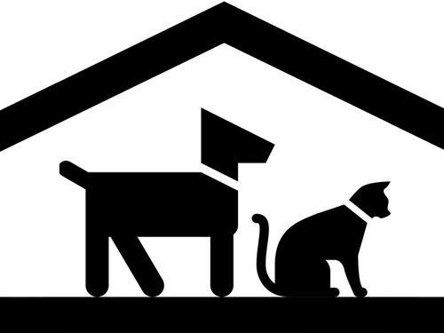 動物保護施設でボランティア
