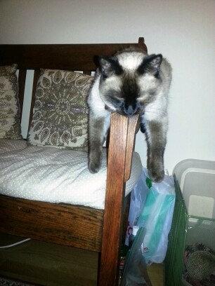 どこでも寝る猫たち03