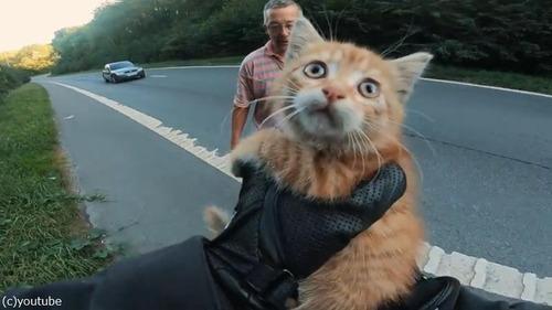 高速道路で子猫を救出04
