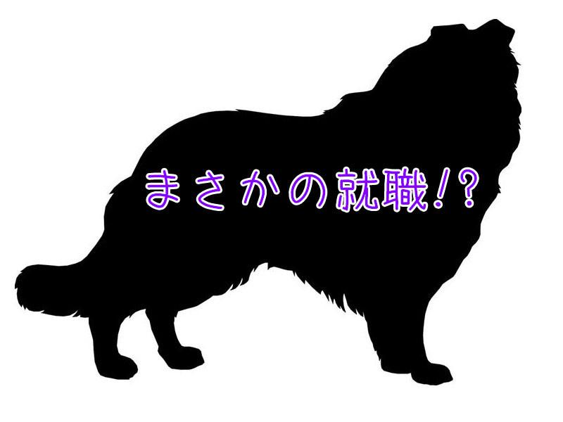 「逃げたうちの犬が近所の店にいると知り、迎えに行ったら…」→「えっ、就職してる!?」