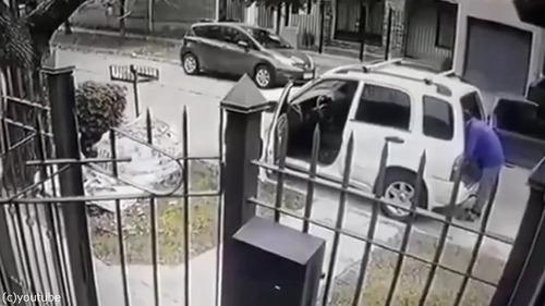 ボクサー犬、飼い主さんを襲った強盗を撃退01