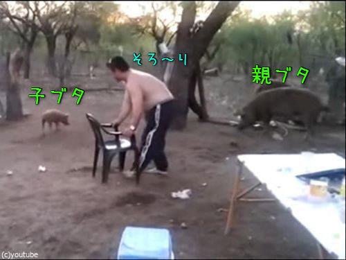 親豚が激怒00