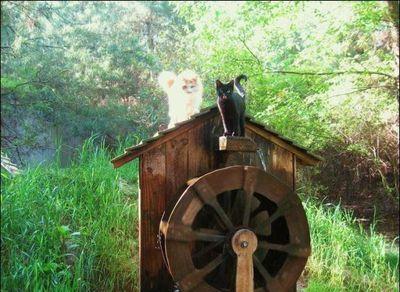 猫の王国10
