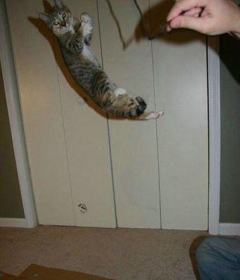 猫ジャンプ11