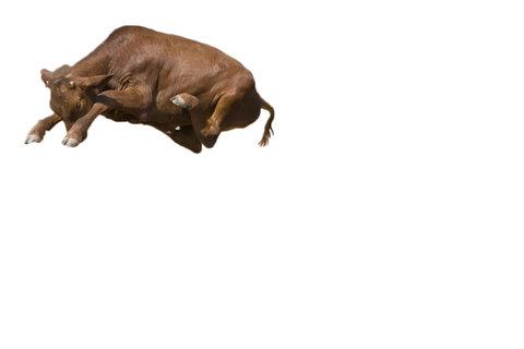牛のジャンプ力を03