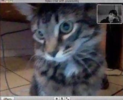 ビデオチャットで猫が自分を認識してくれた02