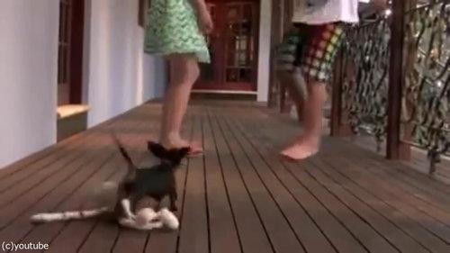 レディを守る小さな子犬01