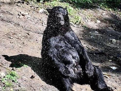 クマさんの水浴び03