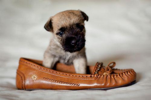 靴の中の犬09