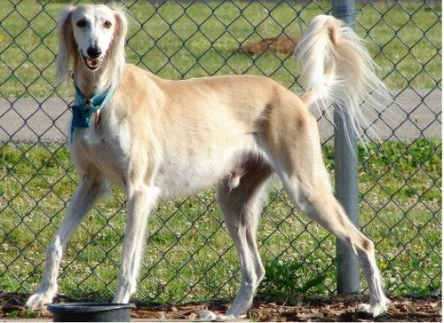 犬種は100年でこう変わった02