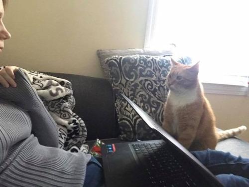 猫が見つめてくる09