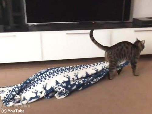 毛布泥棒の犯人00