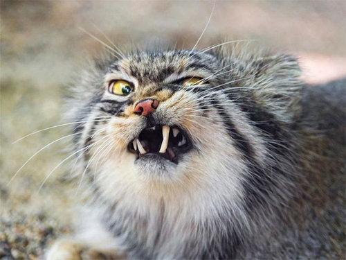 くしゃみ直前の猫15