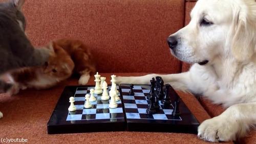 猫がチェスの審判をすると…06
