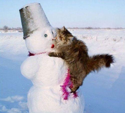 雪なんてへっちゃらな猫10