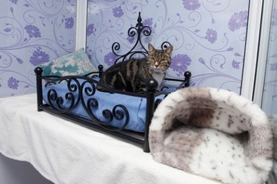 猫の高級ホテル01
