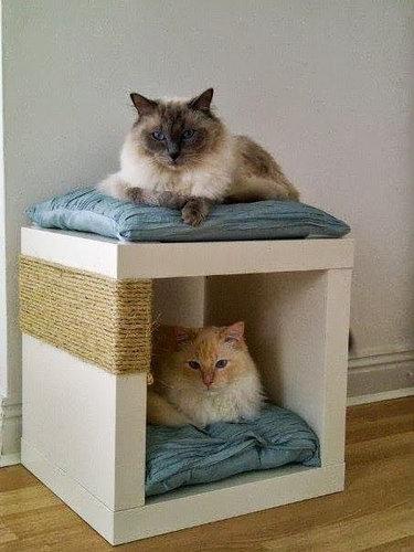 猫の飼い主が知っておきたいこと11