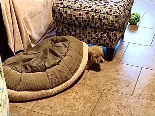 犬のベッドを逆さにすると