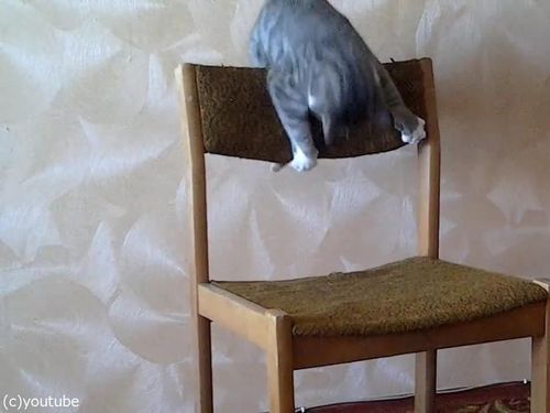猫がイスでアクロバティック06