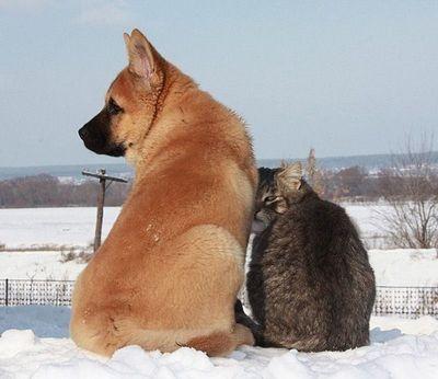 ロシアの犬と猫06
