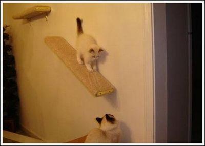 猫用の足場13