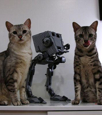 猫スターウォーズ10