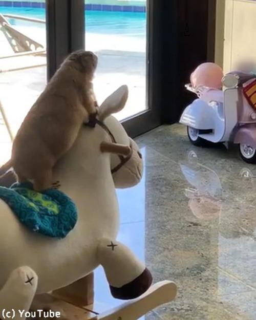 プレーリードッグも木馬が好き01