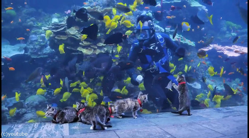 ジョージア水族館を訪れた子猫たち03