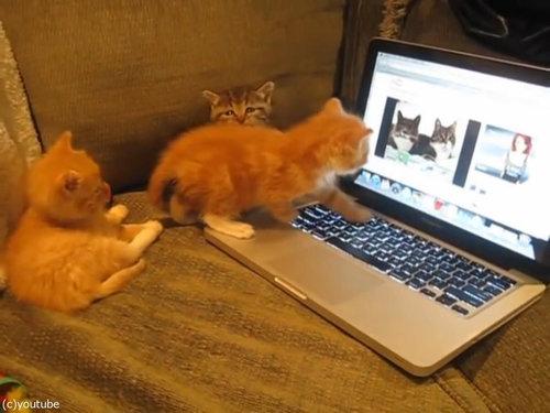 猫動画を見た子猫たち01