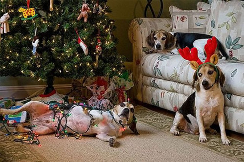 クリスマスとペット21