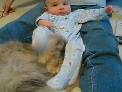 赤ちゃんキックを耐え忍ぶ猫