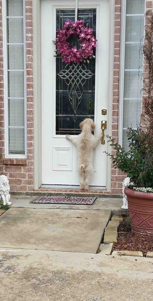 家出した犬01