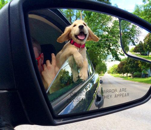 うれしそうな犬たち04