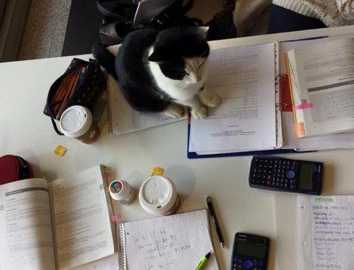 ドイツの大学で暮らす猫02