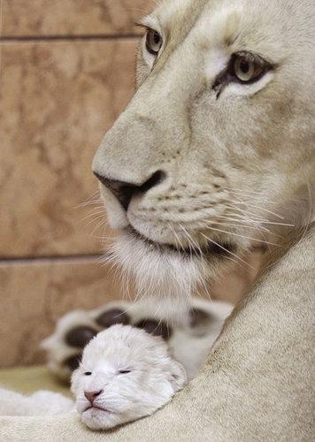 10動物の親子
