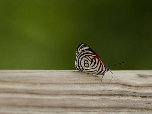 89番の蝶々05