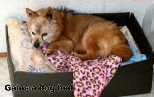 犬の寝場所02