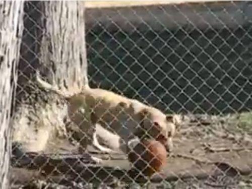ボール遊びが上手な犬01