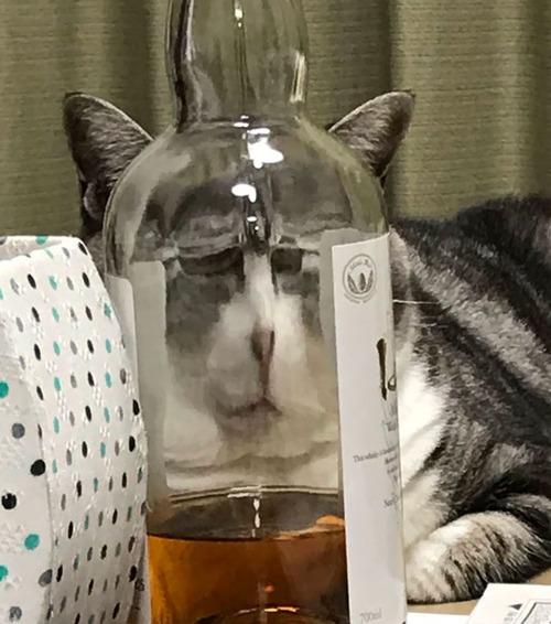 ガラス越しの動物09