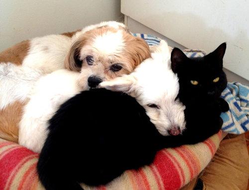 誰にも心を開かなかった犬が、猫と親友に06