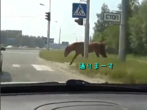 横断歩道を渡る馬