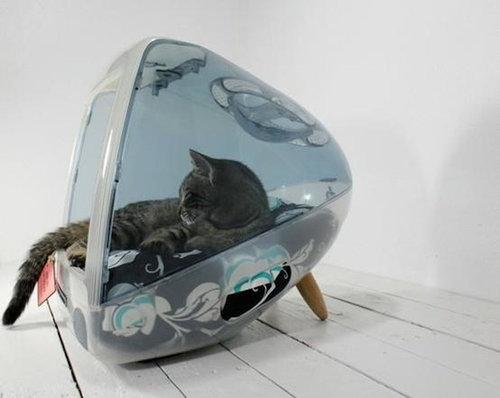 iMacと猫13