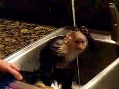 チビおさるのお風呂