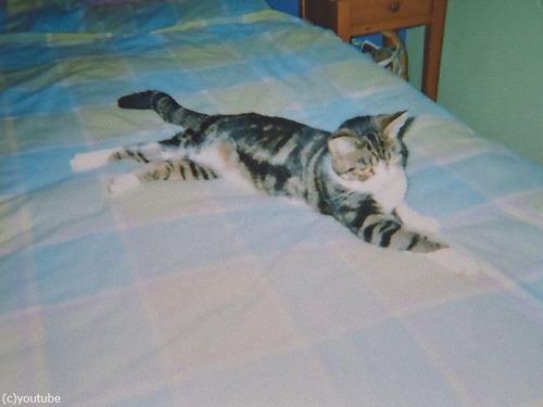 13年後に発見された猫00