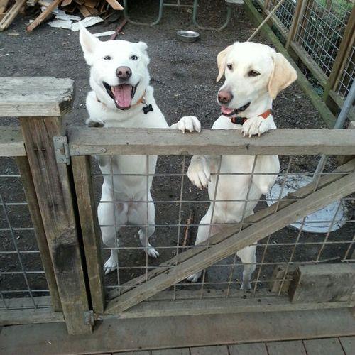 犬の新しい飼い主が写真を送ってきた03