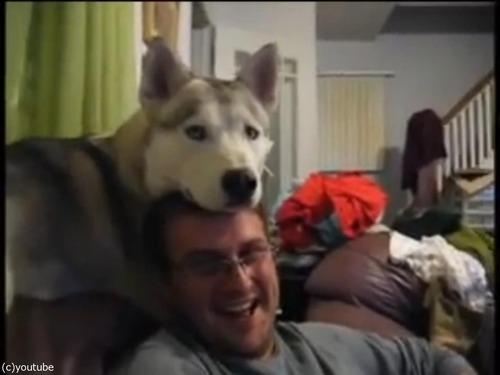 犬が頭の上に顔を乗せてくるとできる遊び05