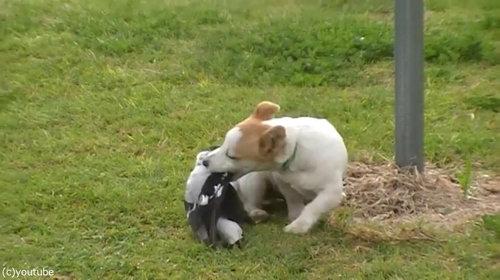 鳥と犬は親友になりうる05