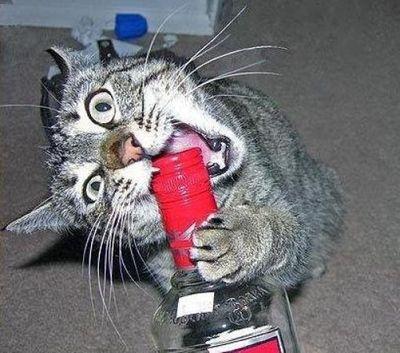 ハッピバースデーな猫10